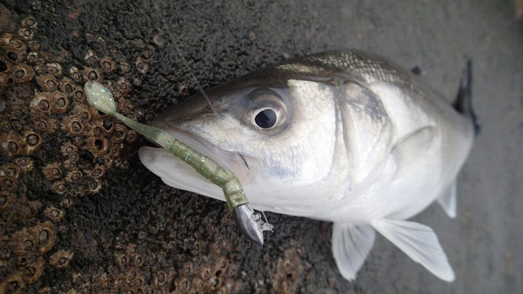 Bass caught on HTO Mace light game lure