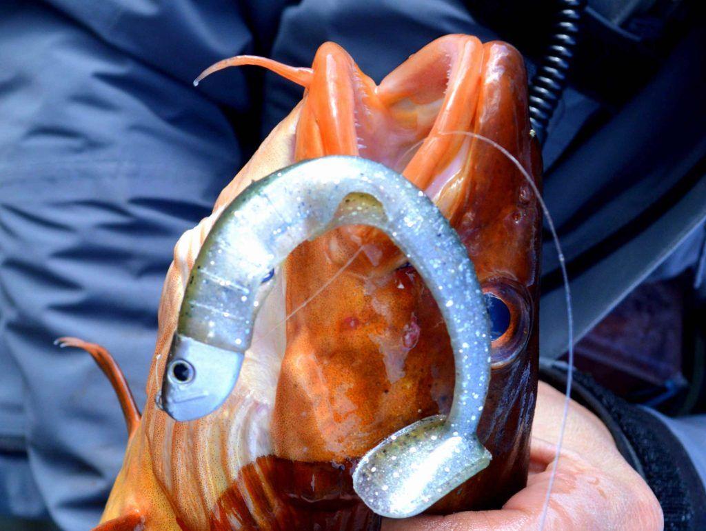 Artic Eel Kelpie