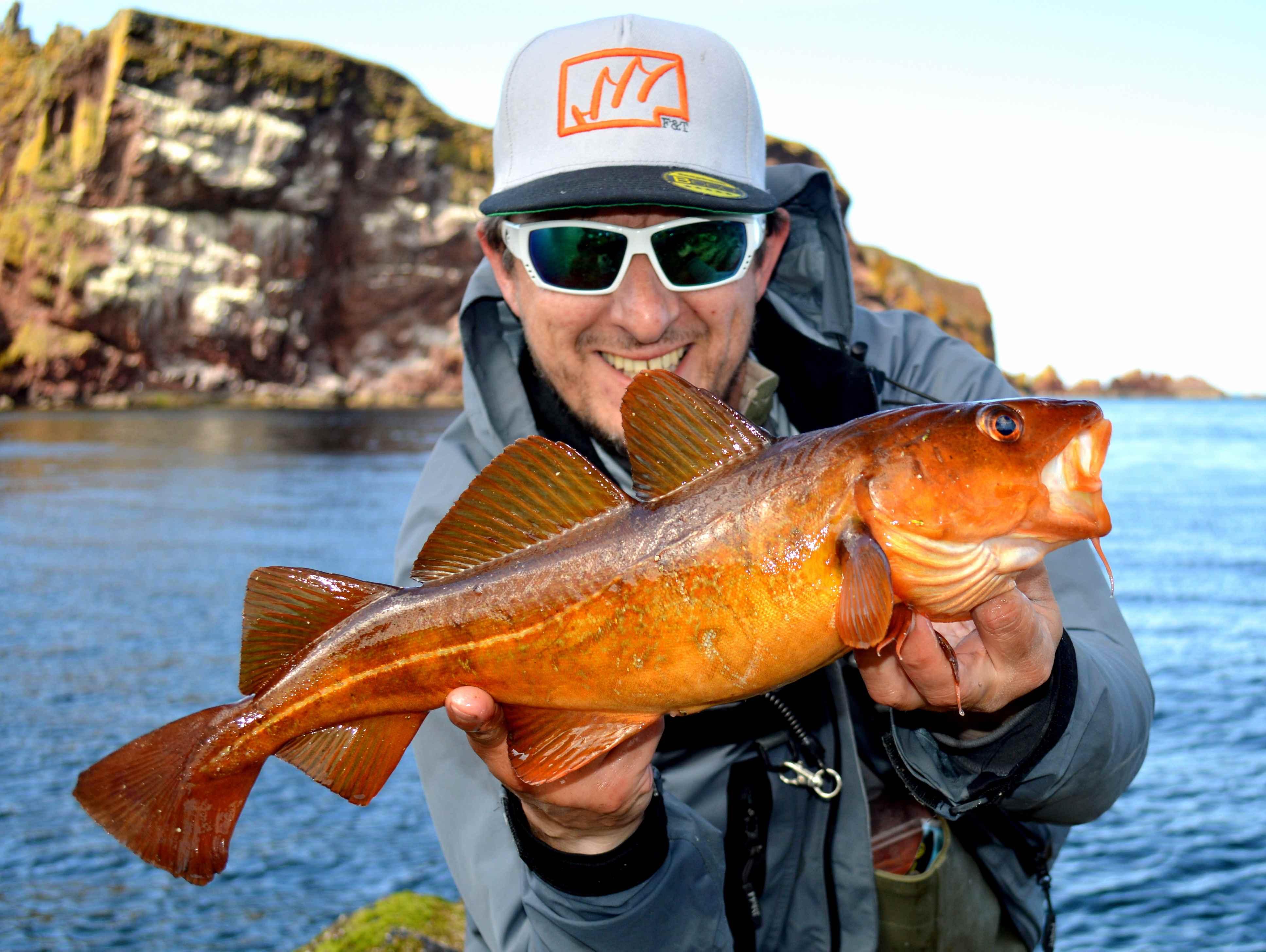 Vivid Kelp Cod
