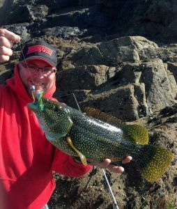 George Cunningham with his winning Ballan Wrasse 42cm (Large)
