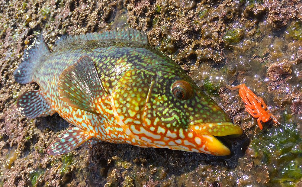Adam Kirby - early season wrasse lure fishing