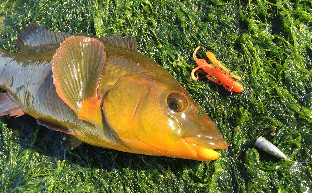 Adam Kirby – early season wrasse lure fishing