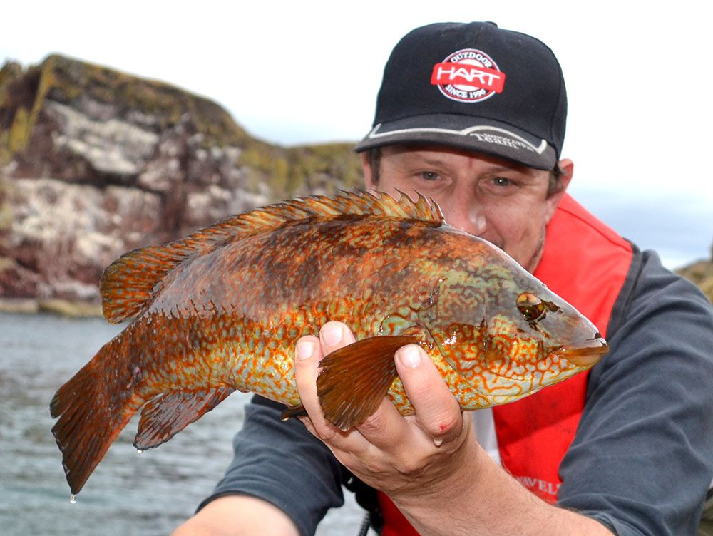 Hard fighting wrasse on LRF gear