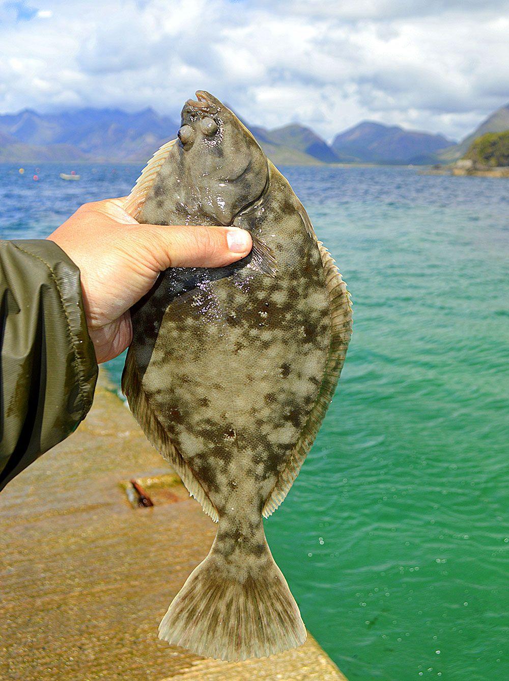Light Rock Fishing for Flounder