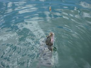 Kayak Species Hunting Diary